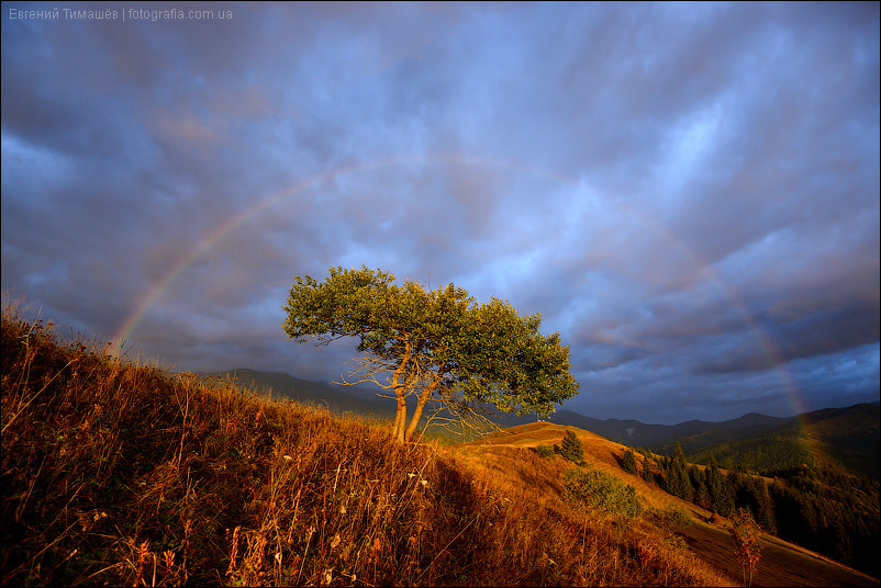 Photograph Tree and rainbow by Yevgen Timashov on 500px