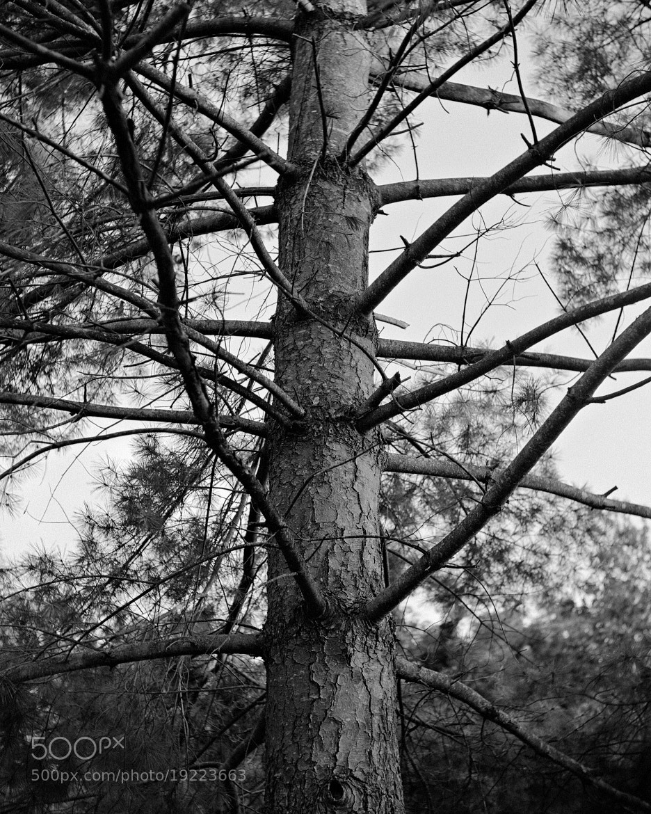 Photograph Branching Out by Paul Glover on 500px