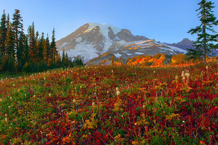 Photograph Mount Rainer In Autumn by Kevin McNeal on 500px