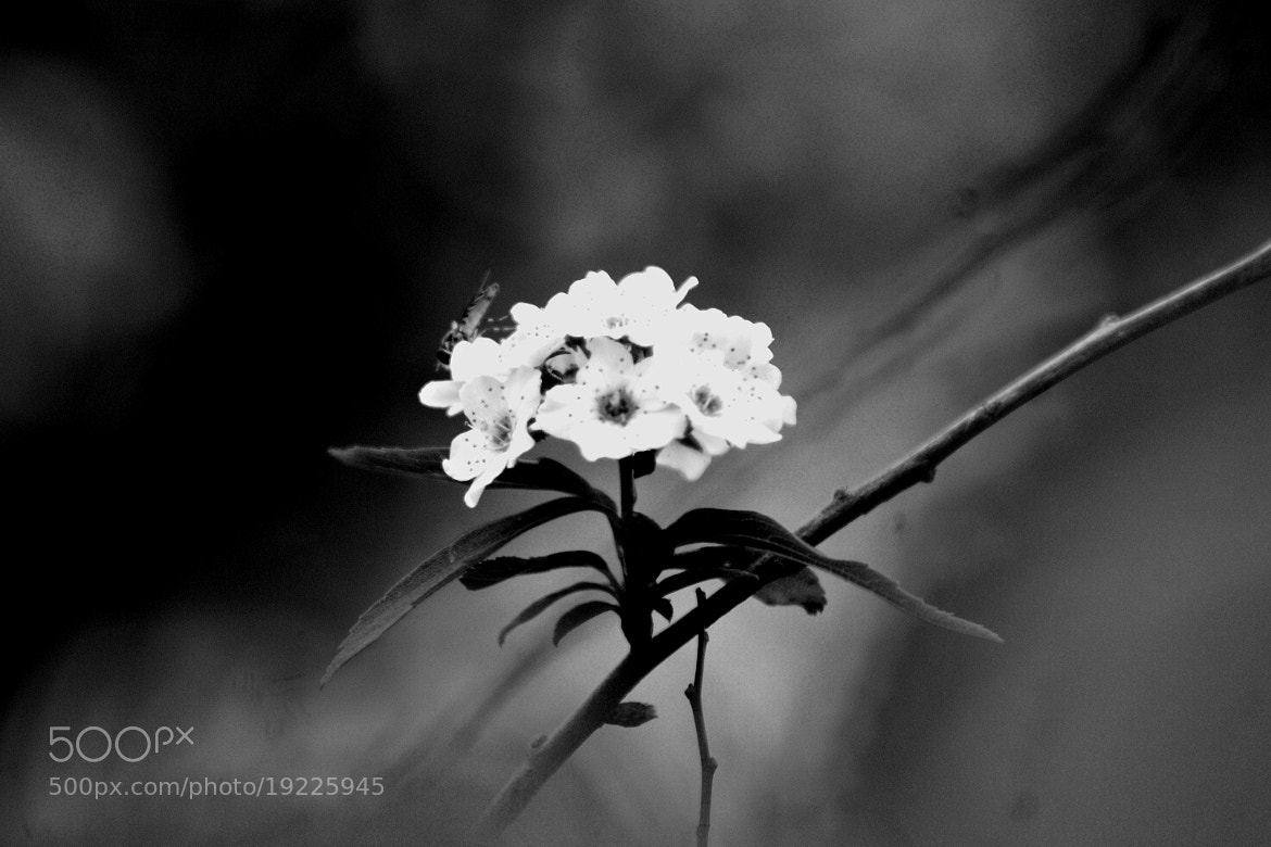 Photograph Fading Beauty by Lilly C. on 500px