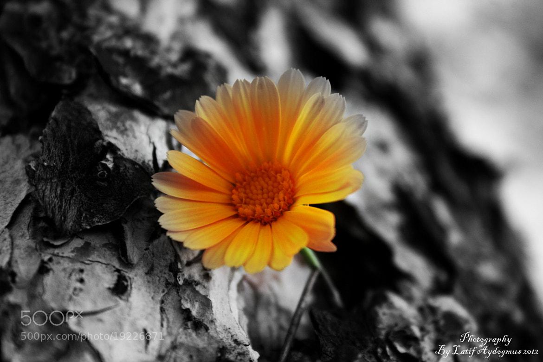 Photograph .................................. by Latif Aydoğmuş on 500px
