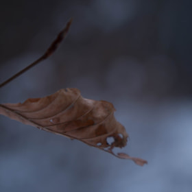Photograph coldLeaf by Lukas Bachschwell