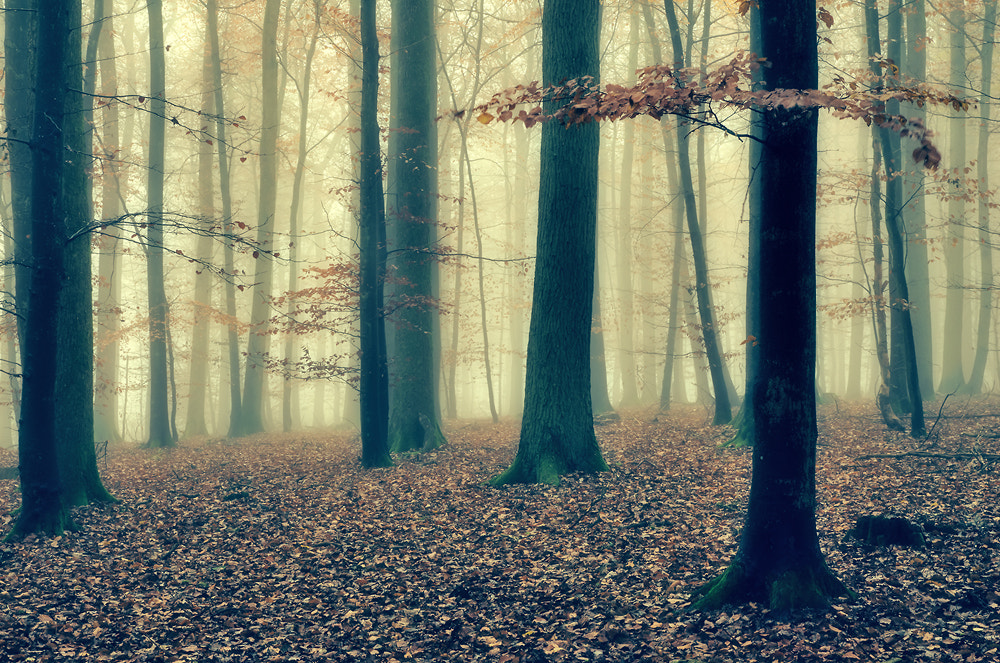 Photograph Novemberwald II by bugramm _ on 500px