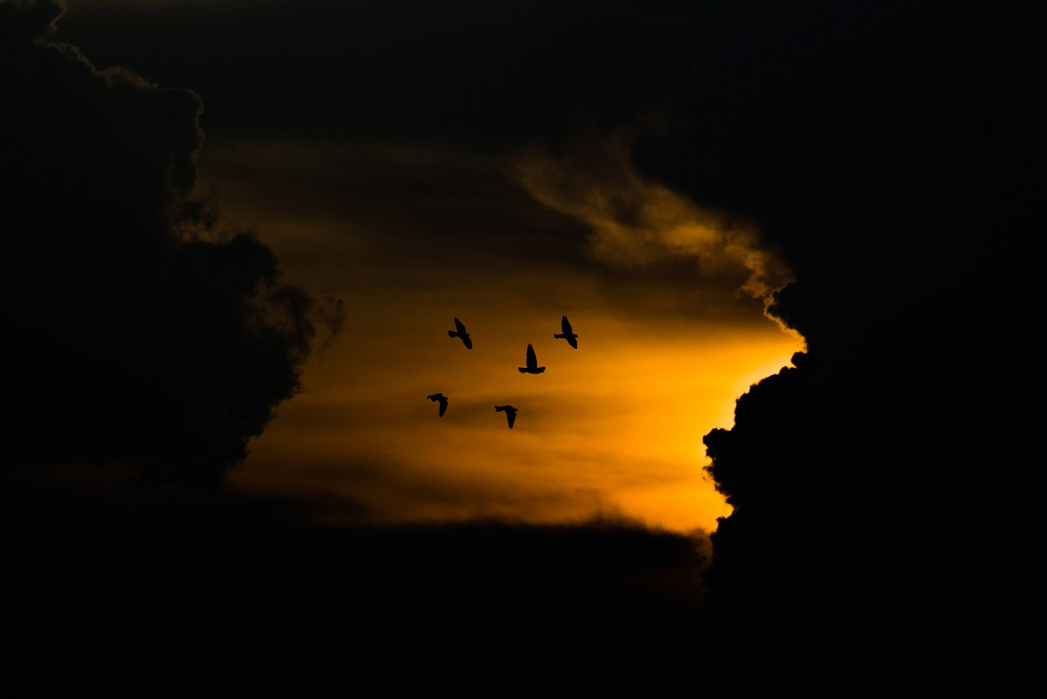 Photograph Flying Away by Siddharth Pandit on 500px