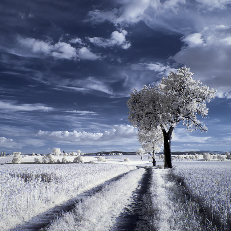 Photograph IR by Piotr Krol on 500px