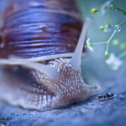 Snail and Ant, Olympus E-M5, SIGMA 30mm F2.8 DN