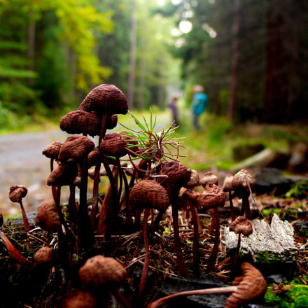 Fungi with Ludvika & Franek, Panasonic DMC-LX2