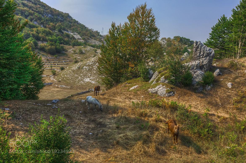 Photograph Horses by Sergey Shaposhnikov on 500px