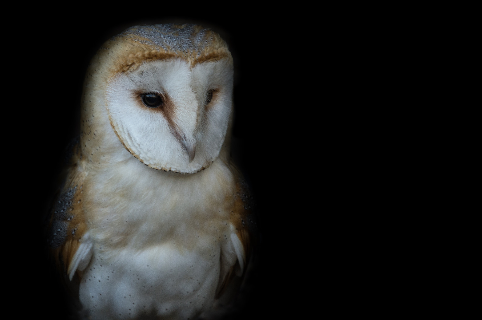 Photograph Owl by Tony Haddow on 500px