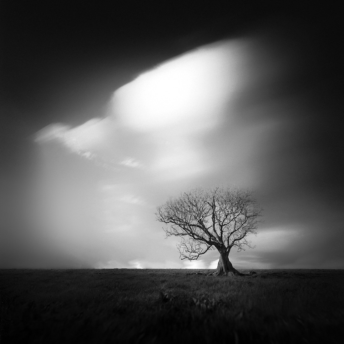 Photograph tree 3 III by Andy Lee on 500px