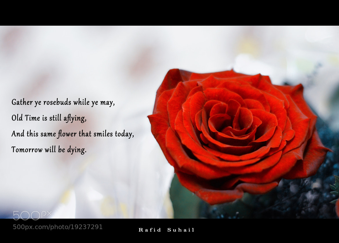 Photograph Flower that smiles today, tomorrow will be dying. by Rafid Suhail on 500px