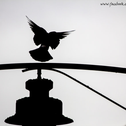 I can fly , Canon EOS 60D, Canon EF 90-300mm f/4.5-5.6