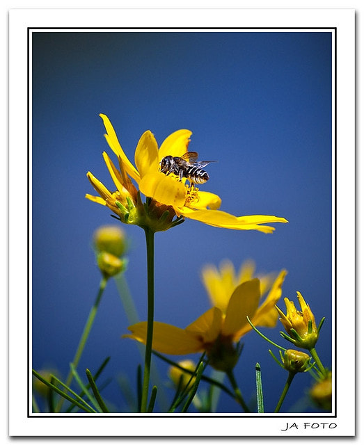 Photograph Busy Bee by Jennifer Allen on 500px