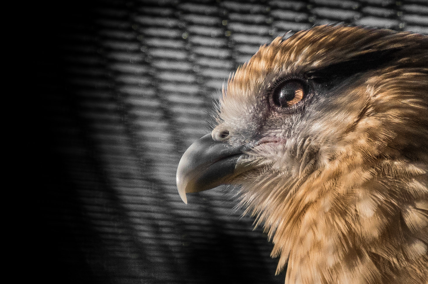Photograph I Want to be FREE by Tony Haddow on 500px