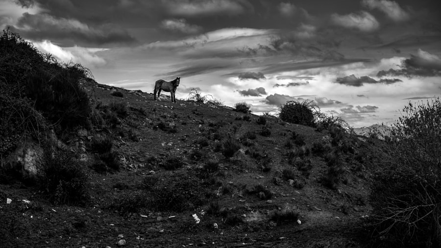 A Horse With No Name de Iñaki MT en 500px.com