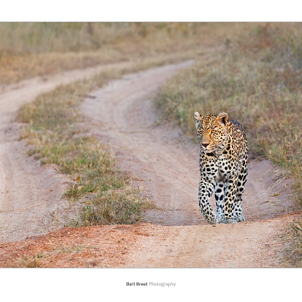 Morning patrol, Canon EOS-1D MARK IV, Canon EF 70-200mm f/4L IS