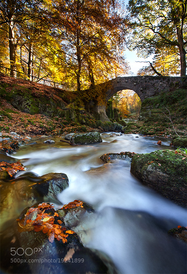 Photograph Shimna river by Stephen Emerson on 500px