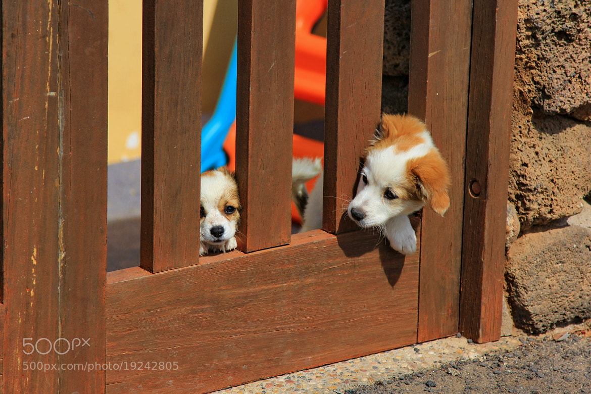 Photograph puppies by Alexander Chernov on 500px