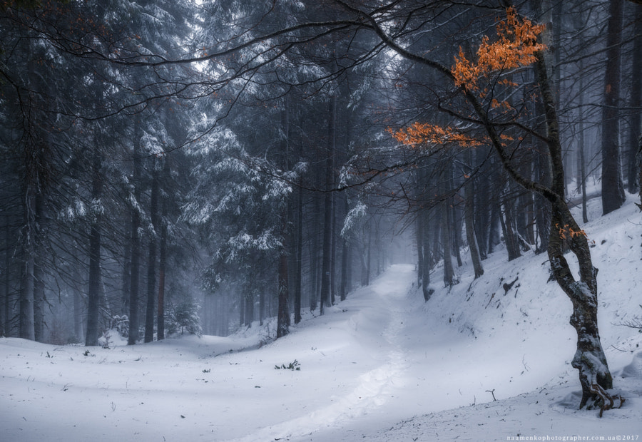 Ukraine. Zakarpatsky region. Winter forest on the way to Petros by Aleksandr Naumenko on 500px.com
