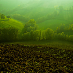 Le colline di Albinea  by Michele Fornaciari (cucjanji)) on 500px.com
