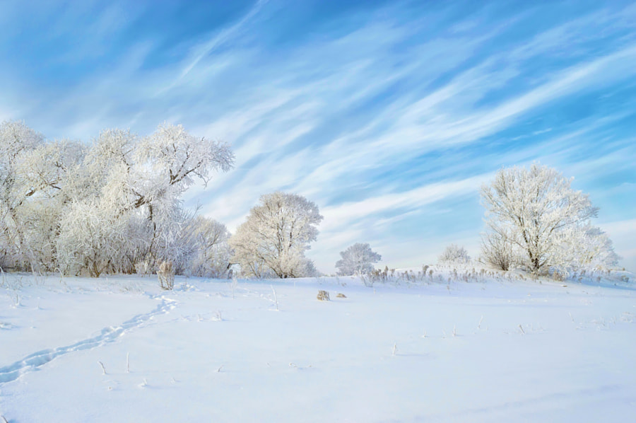 Cold frost and sunshine: day of wonder! by Konstantin Baidin on 500px.com