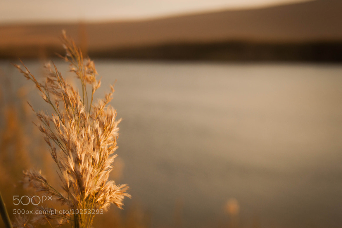Photograph Alone with the wind by Mohamed Hegazi on 500px