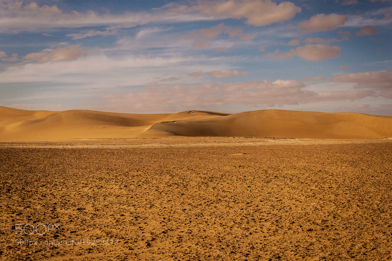 Photograph Wild Desert  by Mohamed Hegazi on 500px