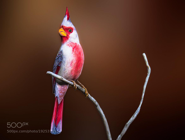 Photograph Desert Cardinal by George Bloise on 500px
