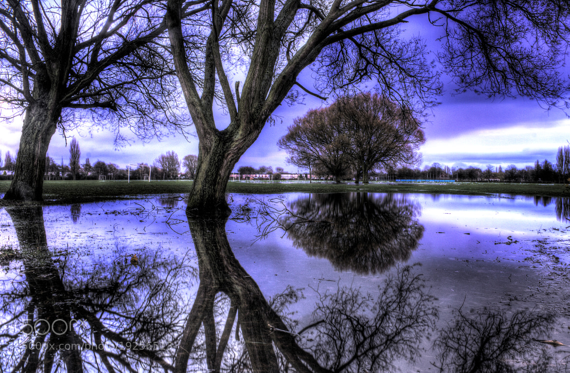 Photograph Trees in the Blue by Keith Britton on 500px