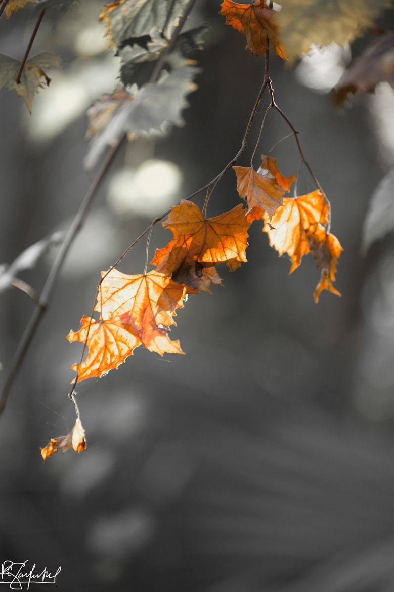 Photograph Fall in Florida by Paul Garfinkel on 500px