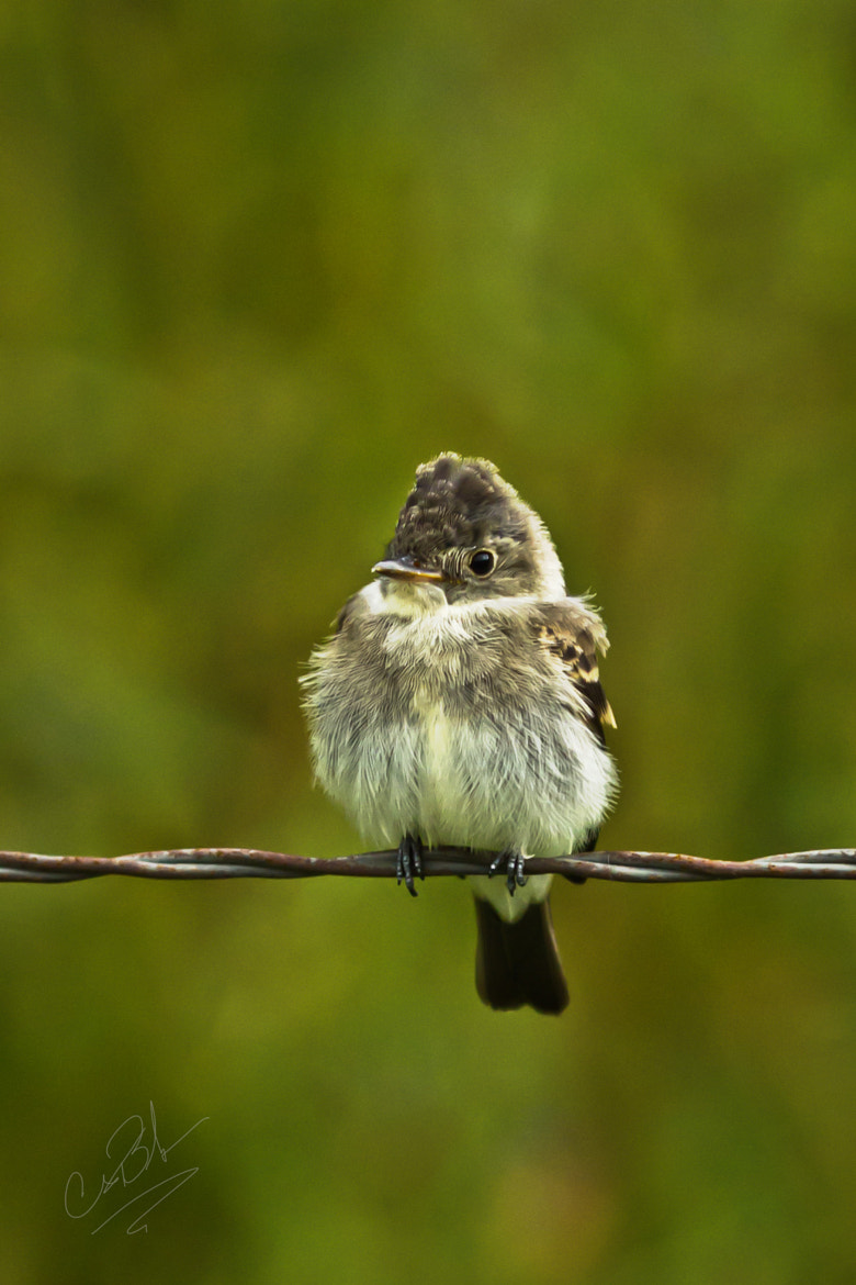 Photograph On the Wire by Chris Belcher on 500px
