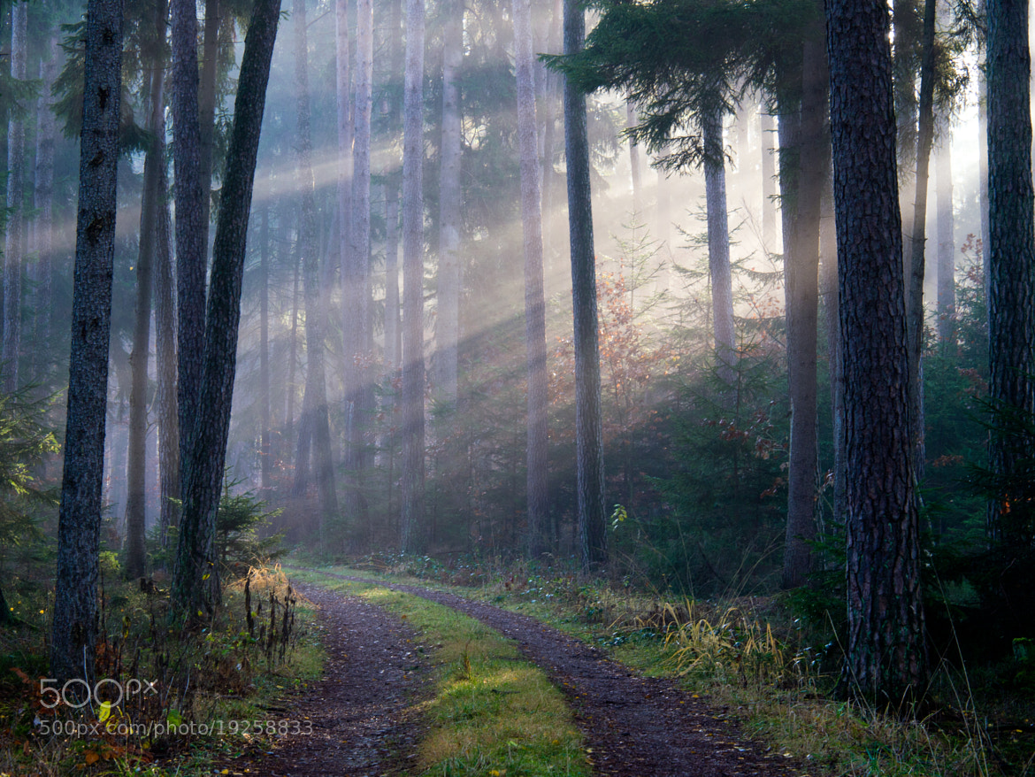 Photograph Morning in the forest by Michael Lüdtke on 500px