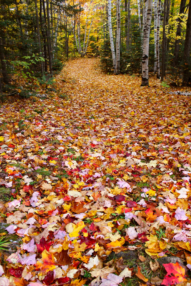 Photograph Autumn Trails by Evan Williams on 500px