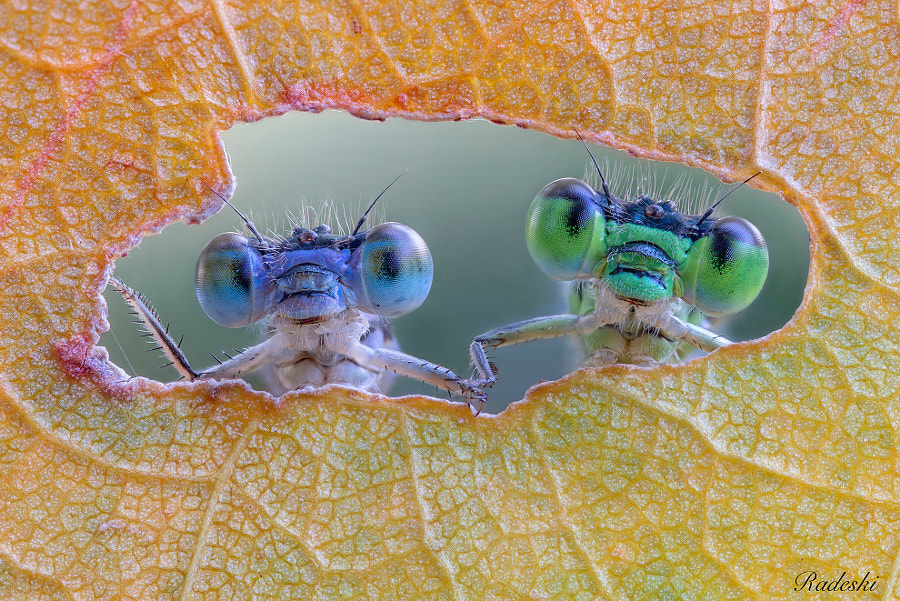 An odd couple at the window by Roberto Aldrovandi on 500px.com