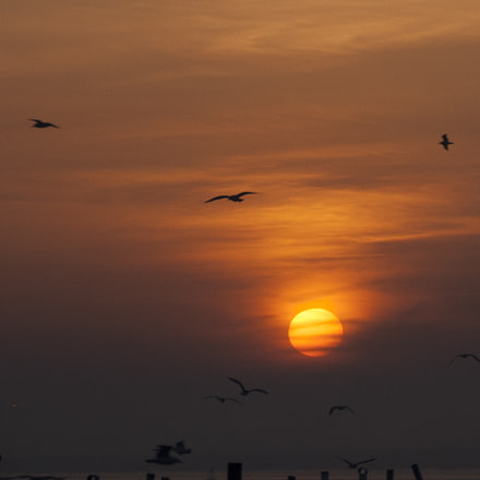 Sunset with sea gull, Sony DSLR-A300, Tamron AF 28-105mm F4-5.6 [IF]