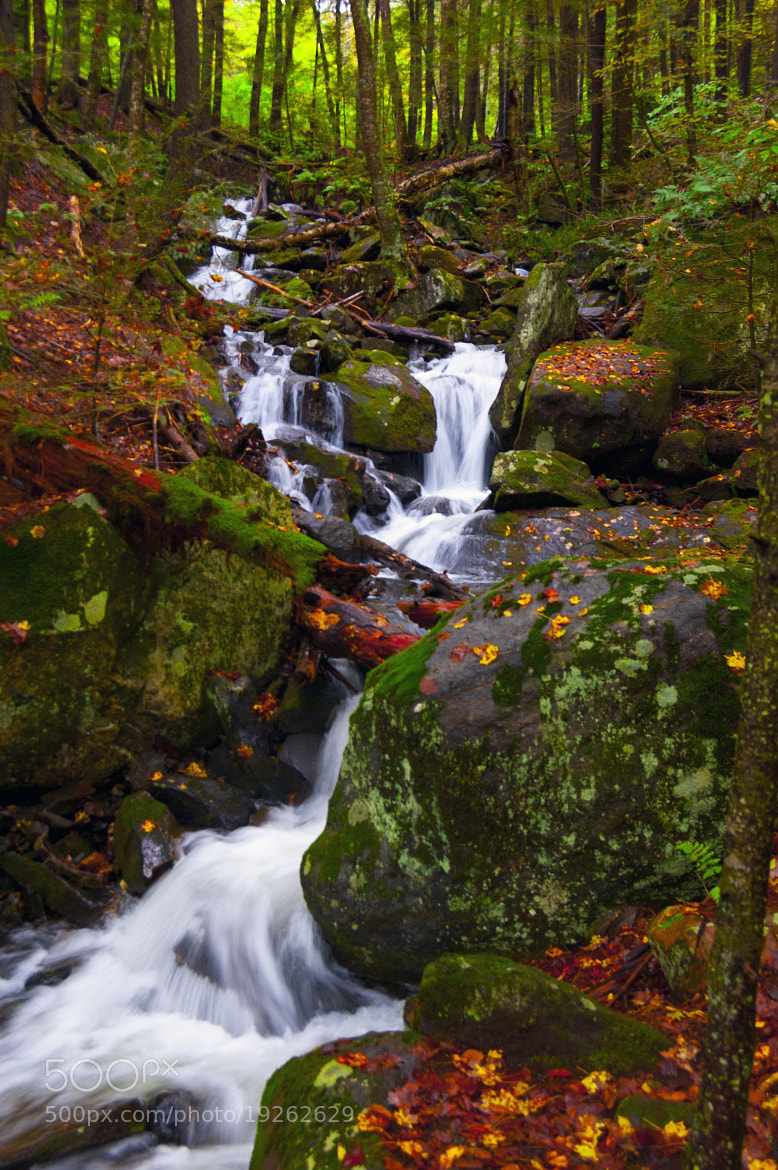 Photograph A Fall Stream by Troy Phillips on 500px