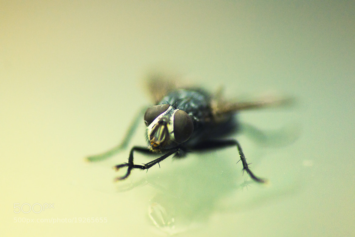 Photograph fly by Evgeny Shabalin on 500px