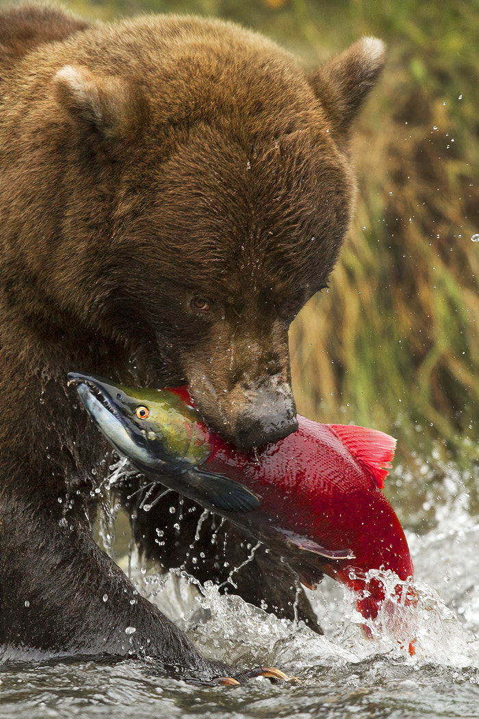 Photograph Deadliest Catch by Stephen Oachs on 500px
