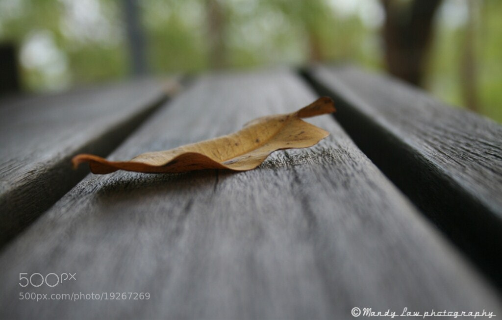 Photograph The only leaf left by Mandy Law on 500px