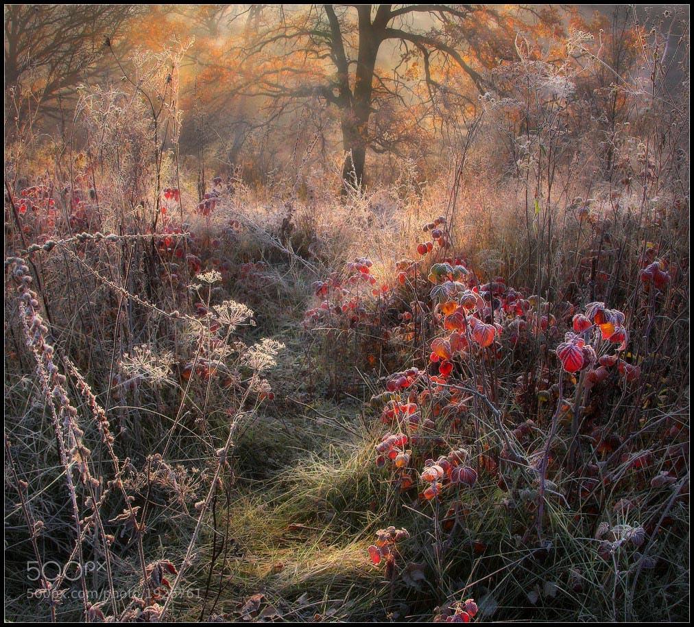 Photograph Fairy Autumn Raspberries... by Alexander Kitsenko on 500px