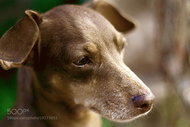 Photograph My best friend, Mel! by  Soli Rocha on 500px