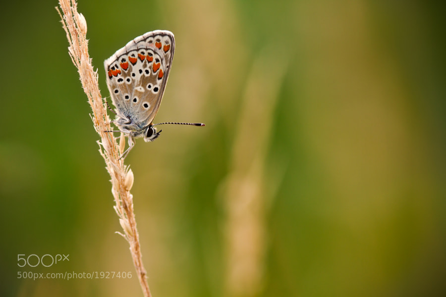 Photograph Papillon by Benoît Legrand on 500px