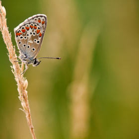 Papillon by Benoît Legrand (darkgibus)) on 500px.com