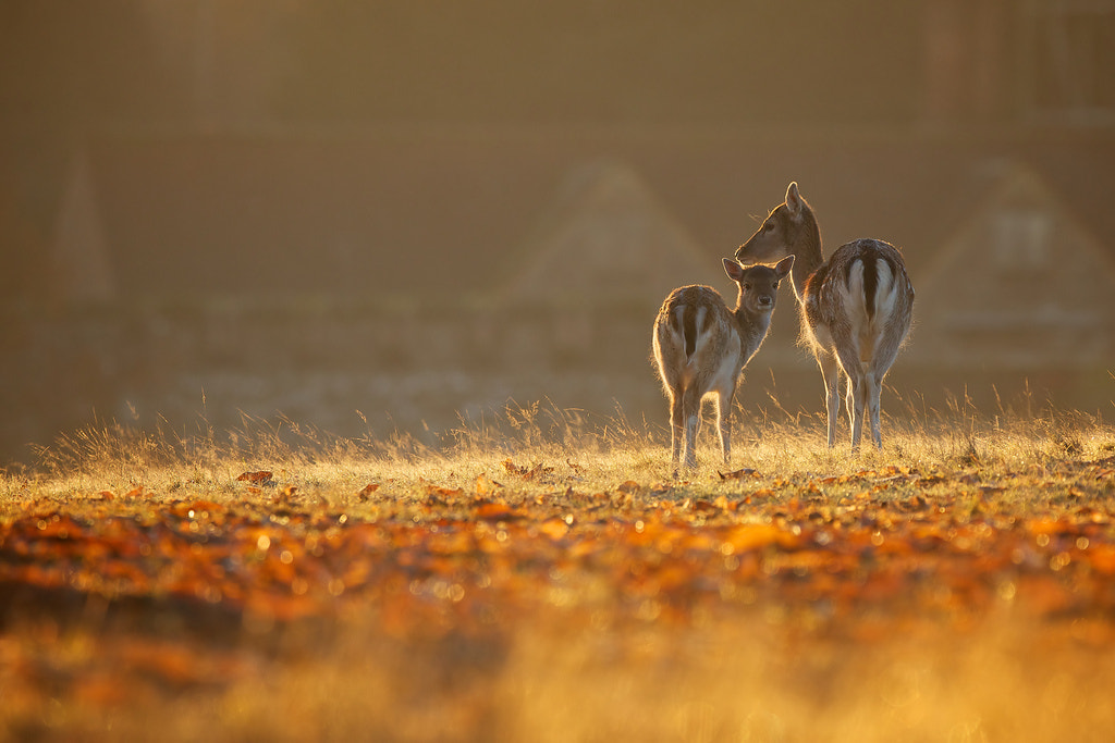 Photograph off home by Mark Bridger on 500px