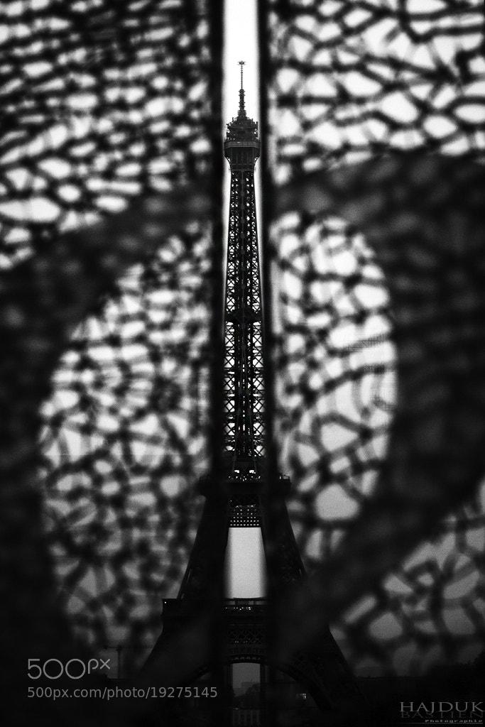 Photograph Cache-cache by Bastien HAJDUK on 500px