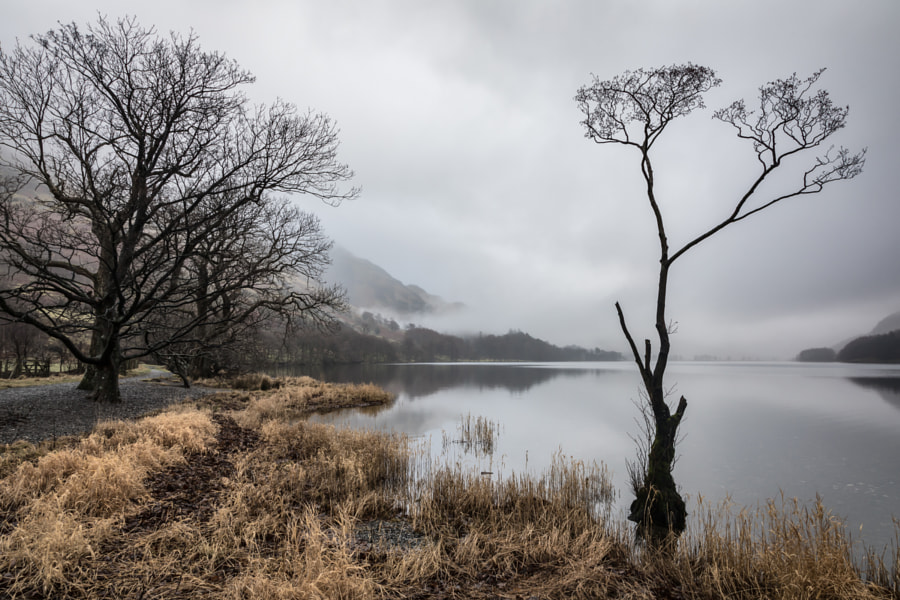 Buttermere Tree 2