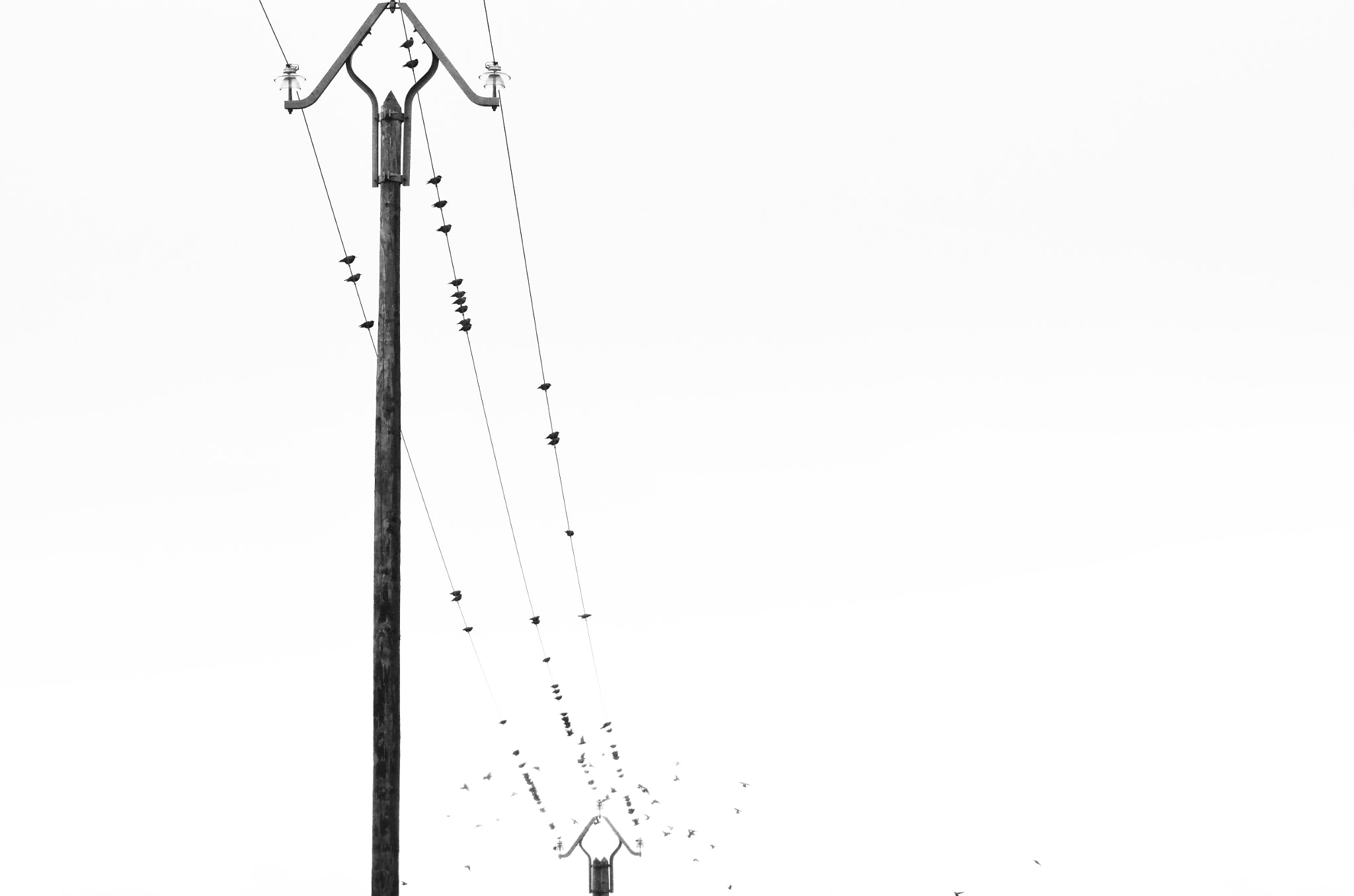 Photograph Birds on  wire by Kim Reynaud on 500px