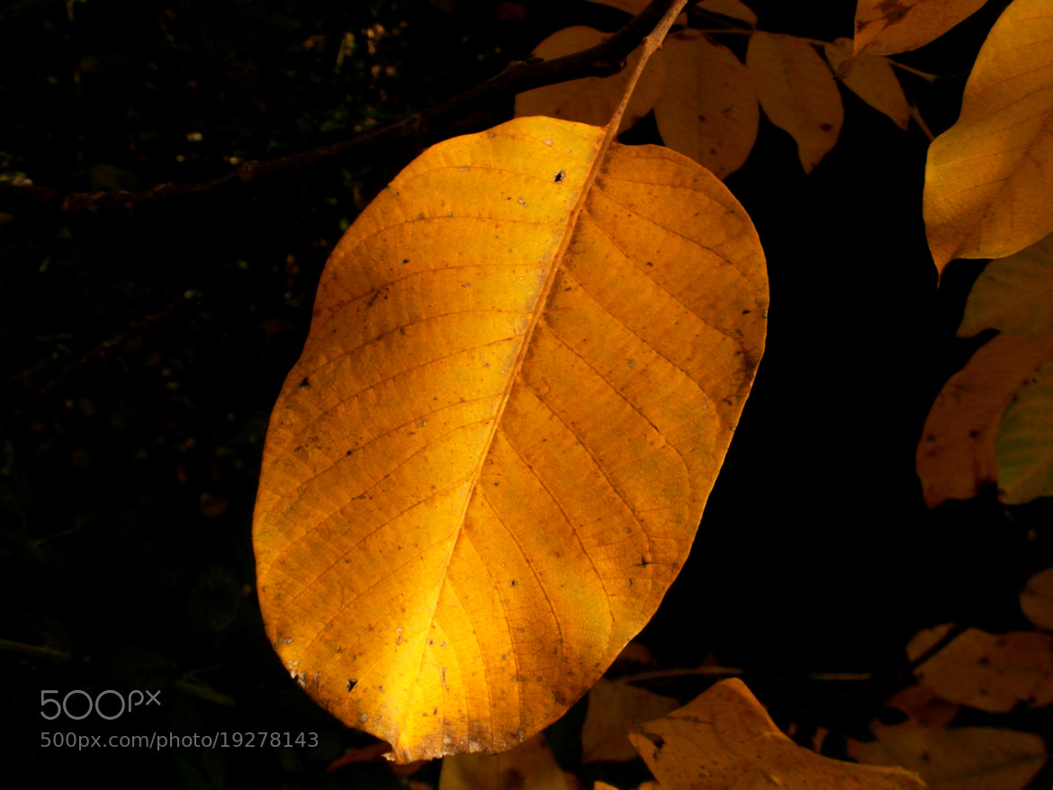 Photograph autunno by AntonelloBerardi on 500px