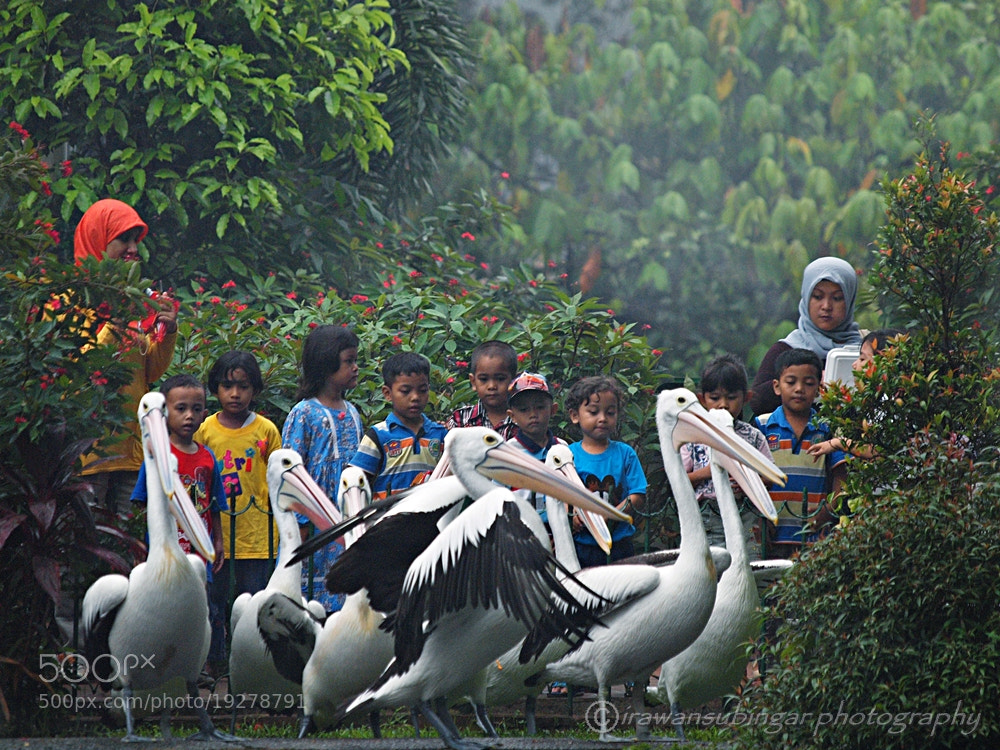Photograph early education on nature by Irawan Subingar on 500px
