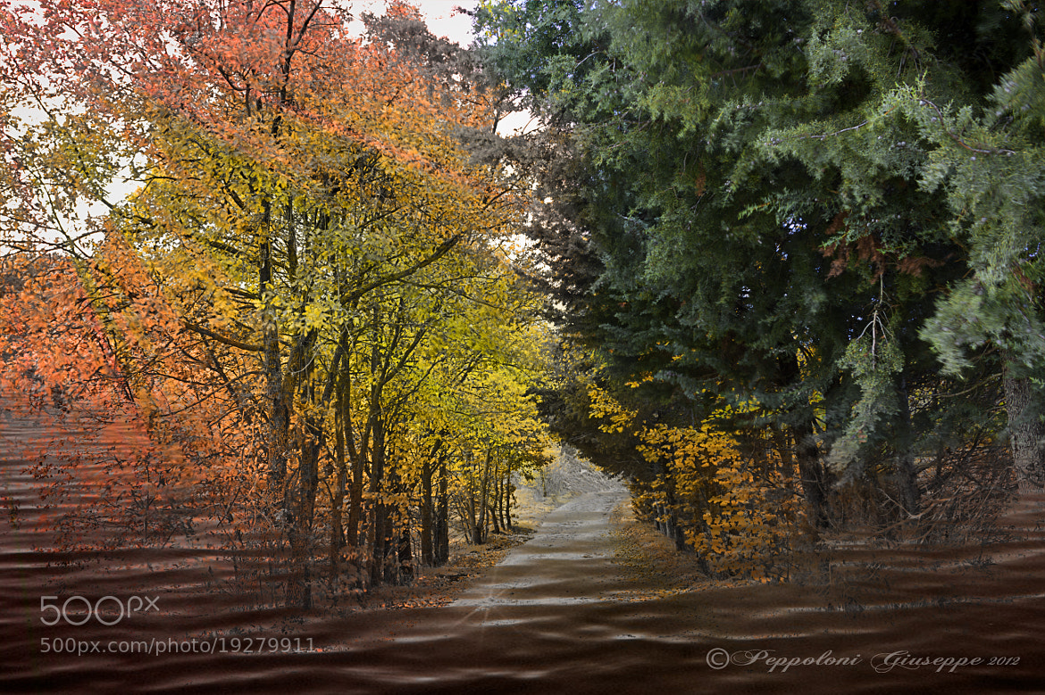 Photograph The colors of 'autumn by Giuseppe  Peppoloni on 500px